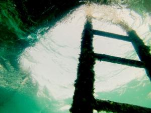 Sortir la tete hors de l eau_freely-10055